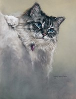 Sapphires and Whiskers Fine Art Print