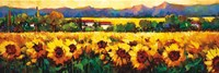 Sweeping Fields of Sunflowers Fine Art Print