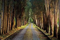 Tree Tunnel Fine Art Print
