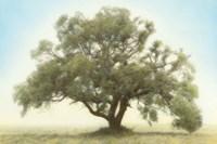 Oak & Blue Sky Fine Art Print