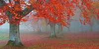 Arboles Rojos Fine Art Print
