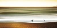 Golden Shores Fine Art Print