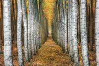 Tree Farm Fine Art Print