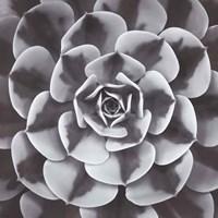 Natural Designs III Fine Art Print