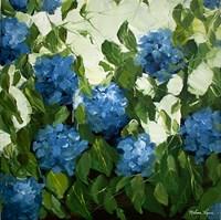 Blue Hydrangeas Fine Art Print