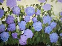 Purple and Blue Hydrangeas Fine Art Print