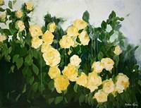 Yellow Rose Bush Fine Art Print