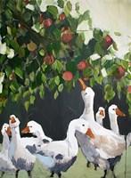 Apples and Ducks Fine Art Print