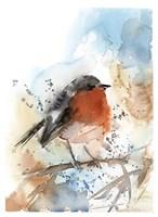 Robin II Fine Art Print