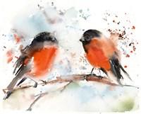 Robin Pals II Fine Art Print