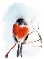 Robin III Fine Art Print