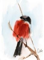 Robin IV Fine Art Print