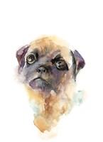Precious Pug Fine Art Print