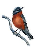 Robin Fine Art Print