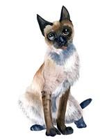 Cat II Fine Art Print
