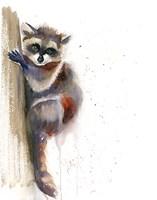 Raccoon II Fine Art Print