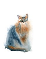 Ginger Cat II Fine Art Print