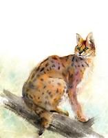Wild Kit Fine Art Print