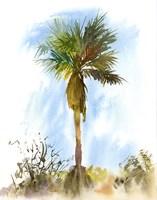 Palm Tree Fine Art Print