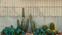 Cactus Garden Fine Art Print