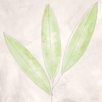 Blush Bamboo Fine Art Print