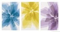 Three X-Ray Flowers Fine Art Print