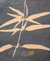 Blue XIII Fine Art Print