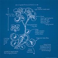 Blueprints I Fine Art Print