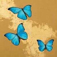 Cerulean Butterfly II Fine Art Print