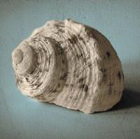 Seashell Study I Fine Art Print