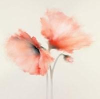 Pink Chiffon II Fine Art Print