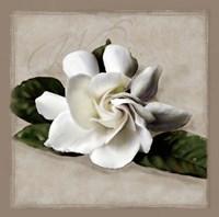 Botanical Gardenia Fine Art Print
