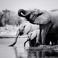 Namibia Elephants Fine Art Print