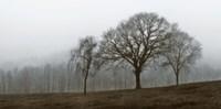 Autumn Fog Fine Art Print