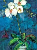 Phalaenopsis I Fine Art Print