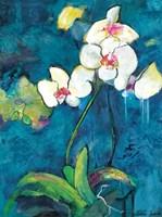 Phalaenopsis II Fine Art Print
