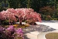 A Cherry Tree Blossoms Over A Rock Garden In The Japanese Gardens In Portland's Washington Park, Oregon Fine Art Print