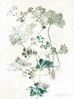 Geranium Botanical Fine Art Print