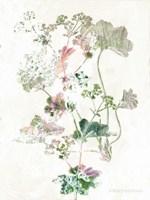 Boho Geranium Botanical Fine Art Print