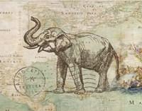 Elephant Trunk II Fine Art Print