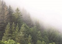 Alaska Green Trees I Fine Art Print