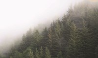 Alaska Green Trees II Fine Art Print