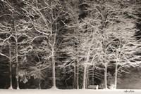 Snowy Trees Fine Art Print