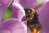 Bee II Fine Art Print
