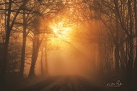Misty Sunrise Fine Art Print