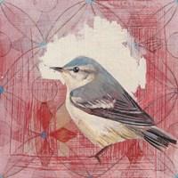 Cerulean Warbler Fine Art Print