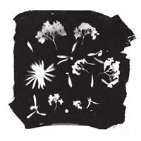 Nature by the Lake Flowers IV Black Fine Art Print