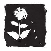 Nature by the Lake Flowers II Black Fine Art Print