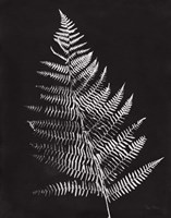 Nature by the Lake Ferns VI Black Crop Fine Art Print
