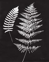 Nature by the Lake Ferns V Black Crop Fine Art Print